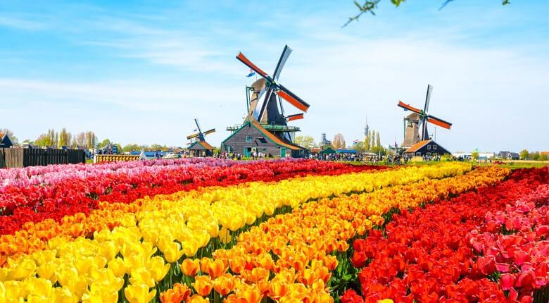 Levitra in Holland kaufen